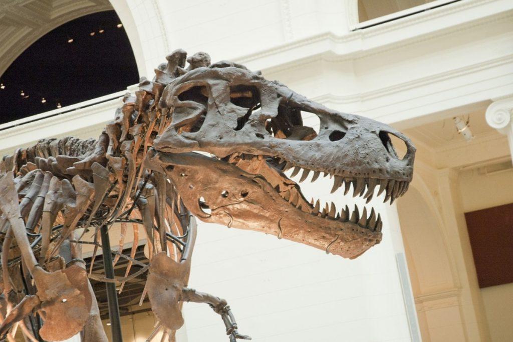 Museo Regionale di Scienze Naturali sezione di paleontologia